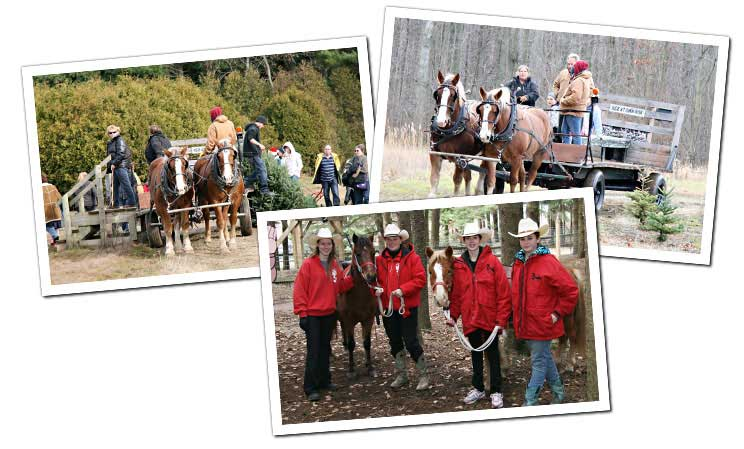 Pony and Belgian Horse Rides at Sloan's Village