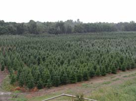 Sloan's Christmas Tree Farm