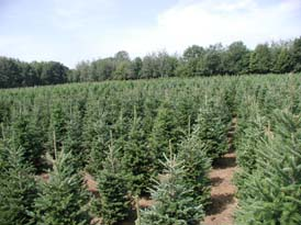 Christmas Tree Farm Field - Sloan's Village